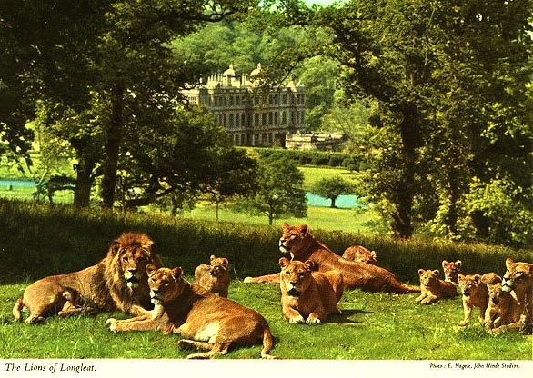The Lions of Longleat